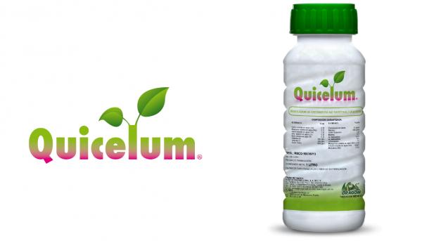 quicelum-niutricion