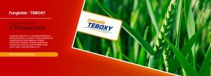enero-teboxy