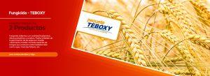 septiembre-teboxy