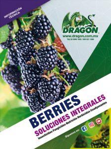 soluciones-berries